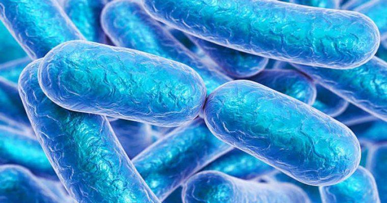بیماری سالمونلا را بیشتر بشناسید