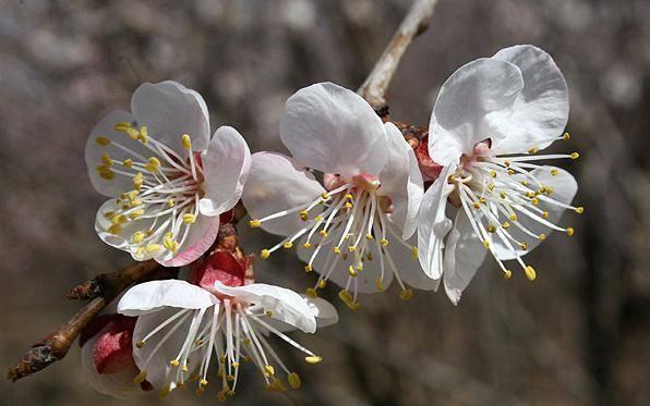 نمایش زیباییهای بهار در طبیعت روستای زیاران+تصاویر